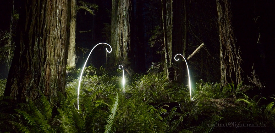 Lightmark No.114, Costal Redwoods, Oregon, USA, Light Painting, Night Photography.