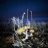 Lightmark No.74, Eagle Bay, Western Australia, Light Painting, Night Photography.